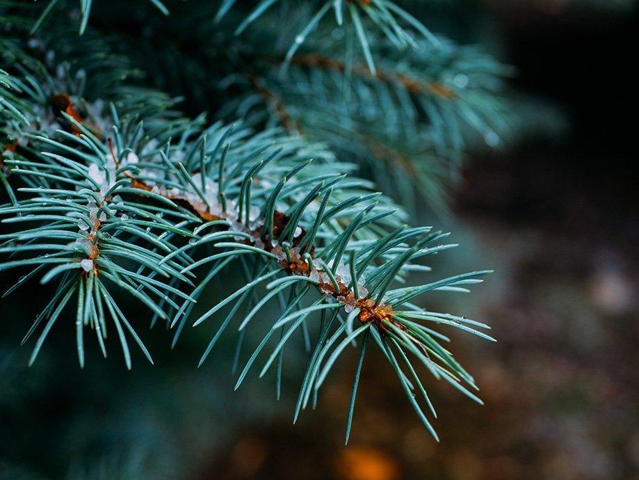 cómo decorar árbol navidad